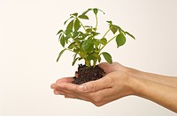 Person holding seedling (thumbnail)