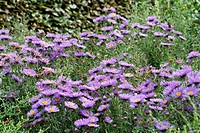 ASTER ´EVENSONG´