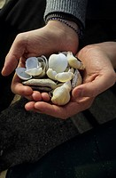 Male Hands filled with Shells _ Flotsam _ Collceting _ Holiday