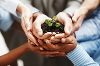 Business development _ Closeup of hands holding seedling in a group