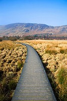 Duckboard path across Borrowdale Valley Cumbria England