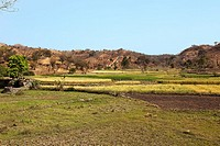 field meadow plain in countryside near ranakpur in rajasthan state in india