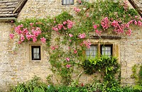 Climbing rose, Bibury, Gloucestershire Cotswolds, UK