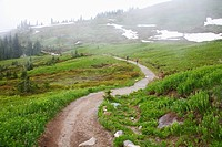 Washington, United States Of America, Fog Along A Trail In Mt. Rainier National Park