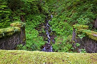 Oregon, United States Of America, Lush Green Foliage Along A Small Creek In Columbia River Gorge National Scenic Area