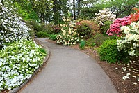 Portland, Oregon, United States Of America, Spring Flowers Along A Path In Crystal Springs Rhododendron Gardens