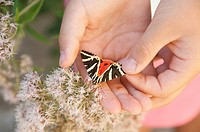 Girl holding butterfly, close up