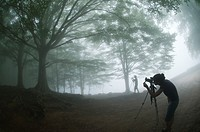 Photographers in a foggy day taking pictures of beech trees Fagus sylvatica , Montseny nature reserve, Spain  This is the Southernmost Beech forest in...