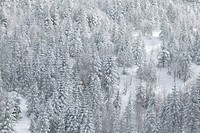 Snow_Covered Trees in Winter. Nagano Prefecture, Japan