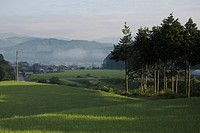 A Rice Paddy Field With a Farming Village in the Distance. Gifu Prefecture, Japan