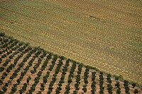 Abstract view of the agriculture fields of the Sharon