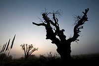 Photograph of the silhouette of a tree stump at dusk