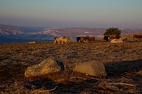 Photograph of the agriculture fields of the lower Galilee