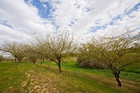 Photograph of a grove in the westerrn Negev
