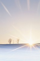 The Sun Setting Over Bare Trees in a Snowy Field. Biei, Hokkaido, Japan