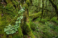 Moss_covered forest