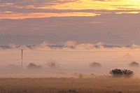 Field covered with fog at sunrise, Fraser Valley, British Columbia, Canada