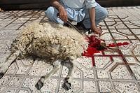 halal slaughtering in Afghanistan