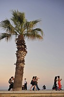 Palm tree and young women at the seaside promenade at dusk, Cassis, Cote d´Azur, Bouches_du_Rhone, Provence, France, Europe