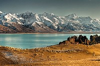 High country sheep station, Mt Sefton behind, Lake Pukaki, Ben Ohau Range behind, Canterbury