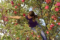 Low angle view of woman picking apple on tree
