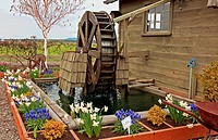 This stock image is a water wheel showing motion is in a beautiful spring garden with many flower bulbs blooming, daffodils, grape hyacinths along wit...