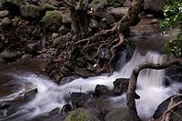 Pukoo Gulch stream at Iliiliopae Heiau Molokai