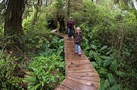 Mother and daughter hike in old growth forest on the Rainforest Trail.