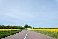 Curved road and oilseed rape field in France