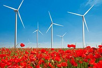 wind turbine in poppy field