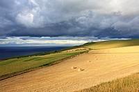 Scottish landscape with hay bales, Scoltand, UK