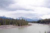 A tour group rafting down the Athabasca River in the Canadian Rocky Mountains.
