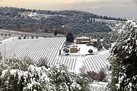 Snow-covered Chianti wine area, Tuscany, Italy