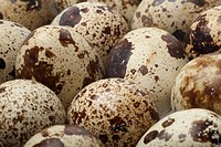 Quail eggs full frame