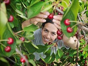 Woman picking cherries from tree