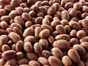 un-cooked Barlotti beans