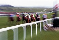 Group of horses on a race course