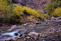 A stream flows out of Zion National Park.