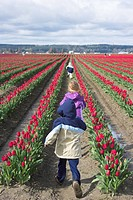 Children in a row of red tulips.