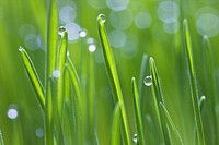 Close up of water drops in grass