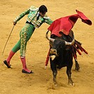 Bullfighting during the San Mateo Festival in Logrono