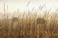 thunder bay, ontario, canada, bales of hay in a field in the fog