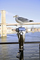 seagull perched on a viewing post, manhattan, new york, united states of america