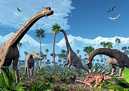 Brachiosaurus dinosaurs. Artwork of four Brachiosaurus dinosaurs feeding in a forest of tree ferns next to snow_capped mountains. Flying pterosaur rep...