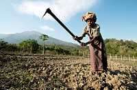 Elderly female farmer, Timor_Leste, planting cassava and sweet potato.