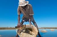 Harvesting salt. Man harvesting salt from salt pools. Photographed in Ifaty, Madagascar.