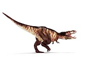 Tyrannosaurus rex, artwork. This dinosaur lived in North America and Asia from about 70 million years ago until the extinction of the dinosaurs some 5...