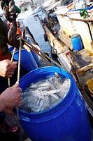 Taiwan, Yilan, Suao Town, Nanfangao, Fishing Harbor