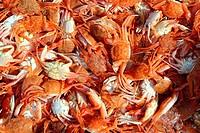 Mediterranean red crab pattern seafood market texture