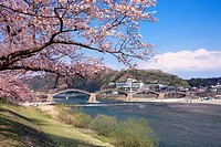 Kintai bridge and cherry blossoms, Yamaguchi Prefecture, Honshu, Japan